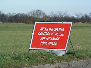 Avian Influenza (Bird Flu) Sign - geograph.org.uk - 339930
