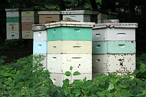 Beehives in Mankato, Minnesota