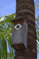 Bird house in brazil