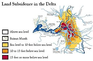 Land Subsidence in the Delta Eric Chase 1995