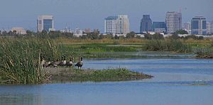 Smaller canada-geese-and-skyline.jpg