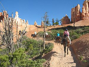 Horseriders in Bryce Canyon-NPS photo