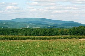 Blue Knob Mountain 4.jpg