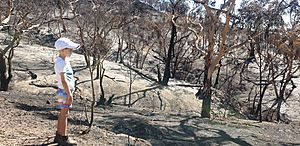 Burnt property after a bushfire