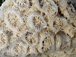 Photograph of coral detail