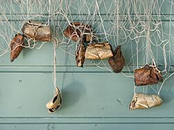 Birch bark fishing net weights