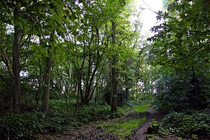 Footpath in Aston Wood - geograph.org.uk - 1464319.jpg