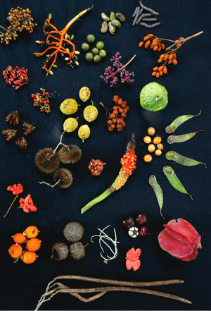 Forest fruits from Barro Colorado