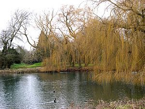 The Duck Pond, Wellhead Gardens, Bourne - geograph.org.uk - 97009