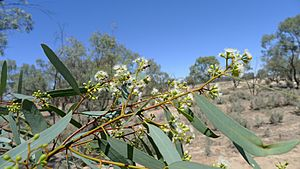 Black Box foliage and flowers (15299115414).jpg