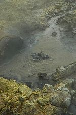Tikitere Mud Pool n