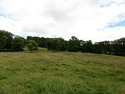 Chillingham Wild Cattle - Chillingham Park policies