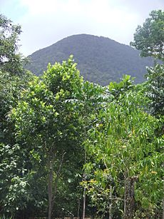 Mount Sorrow, Cape Tribulation, QLD