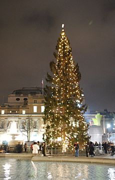 Trafalgar Square Christmas tree8