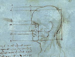 Proportions of the Head