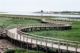 Boardwalk across the dunes in the Irving Eco-Centre