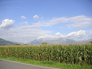 Field, corn, Liechtenstein, Mountains, Alps, Vaduz, sky, clouds, landscape