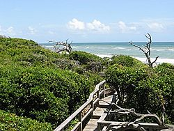 Maritime forest in Pine Knoll Shores, North Carolina