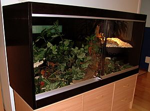 Vivarium with epoxy-coated plywood walls
