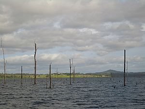 Lake-Tinaroo-drowned-forest-1648