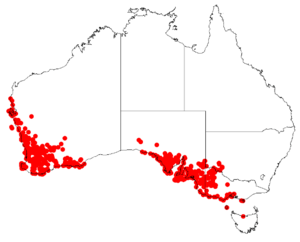 Podotheca angustifoliaDistMap1.png