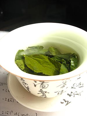 Tea leaves steeping in a zhong čaj 05