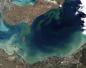 Toxic Algae Bloom in Lake Erie