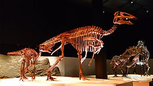 Paleo Hall at HMNS Edmontosaurus
