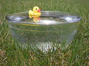 Rubber duck in glass bowl