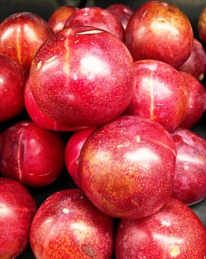 Red pluots