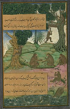 Animals of Hindustan monkeys called bandar that can be taught to do tricks, from Illuminated manuscript Baburnama (Memoirs of Babur)
