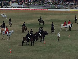 Equestrian competitions, main oval, Ekka, 2015