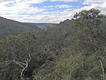 Mitchell-River-from-Bluff-Lookout.jpg