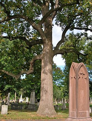 Tulip Tree and Gravestones in Old North Cemetery, Hartford, CT - September 24, 2014