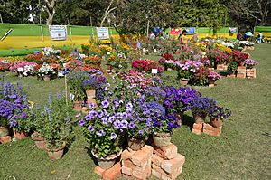 Annual Flower Show - Agri-Horticultural Society of India - Alipore - Kolkata 2013-02-10 4737