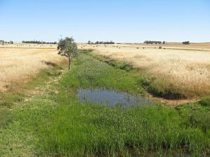 Hill River at Andrews, South Australia. Upstream (southward) view..JPG