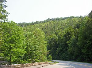 Road near Tellico Plains
