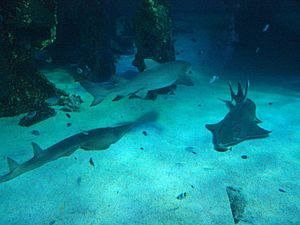 Sharks at the Sydney aquarium