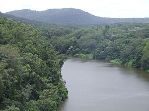 Barron River viewed from the Skyrail gondola to Kuranda