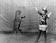 Female animal trainer and leopard