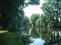 The Wensum under trees