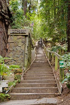 Dipsea Trail Stairs Mill Valley