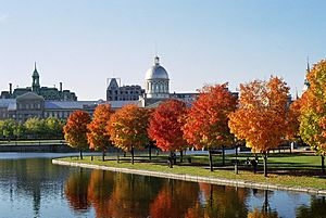 Marché Bonsecours and Foliage