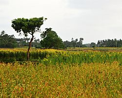 Farmland in Kandarodai