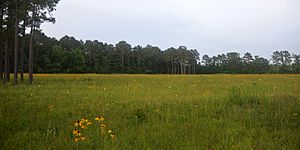 Marysee Prairie Preserve, County Road 2077, Liberty County, Texas, USA (22 May 2020)