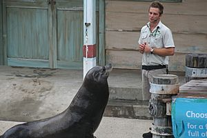 Seal show at Taronga