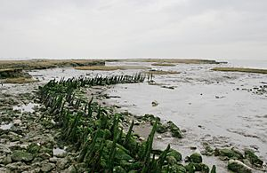 1623 seawall remains canvey island