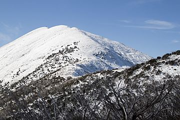 Mount-feathertop-from-summit-track.jpg