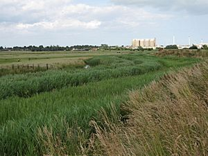 Cantley Marshes - geograph.org.uk - 1403097.jpg