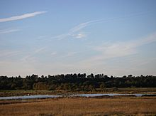 Dingle marsh and Dunwich Forest - geograph.org.uk - 274585.jpg
